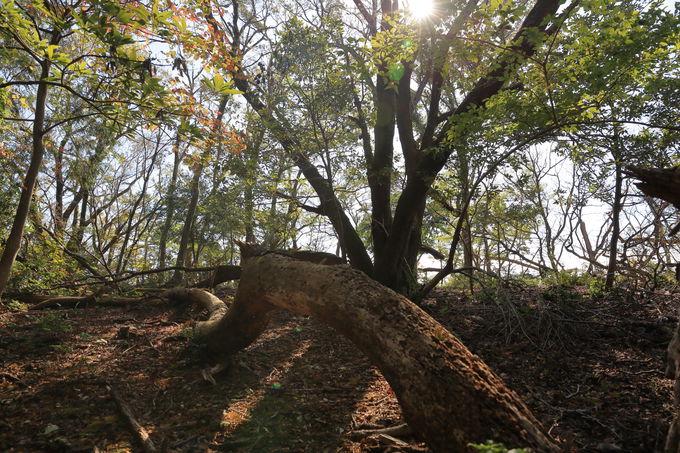 健脚の方は、大平の森、柏峠、旧柏トンネルへの縦走に