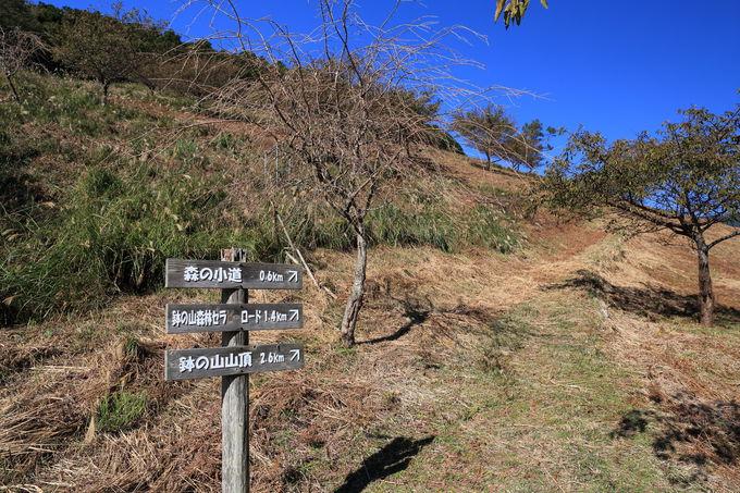 気持ちの良い丘を上っていく「桜の小道」からスタート!