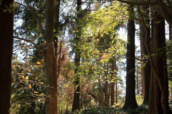 山頂周遊路は樹齢100年超えるヒノキ林や石仏群も