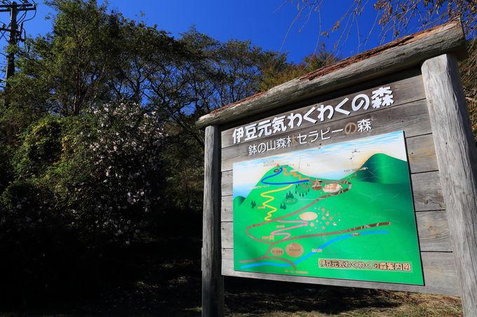 森林セラピー効果がある、伊豆半島ジオパークの「鉢の山」