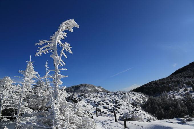 樹氷間を抜け山頂を目指す雪山トレッキングは準備が大切