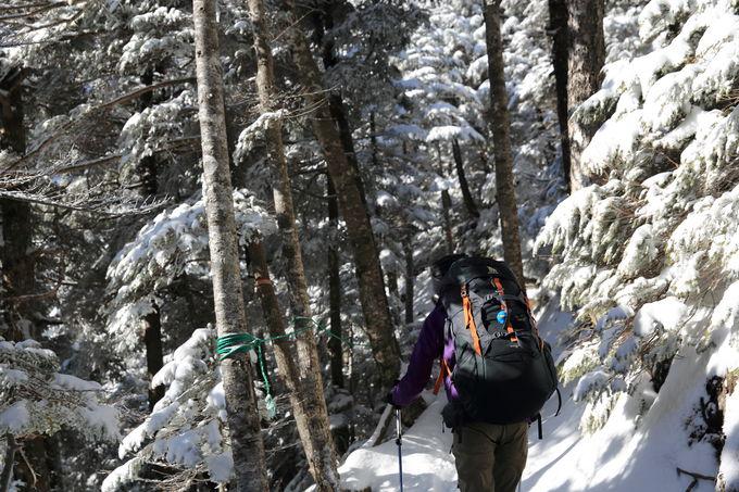 北横岳ヒュッテまで樹林帯を進む