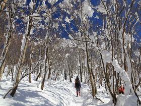 降雪後の絶景雪景色!滋賀県・御殿山の冬山トレッキング