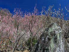 初心者も安心!2時間の手軽な神奈川「幕山」ハイキング