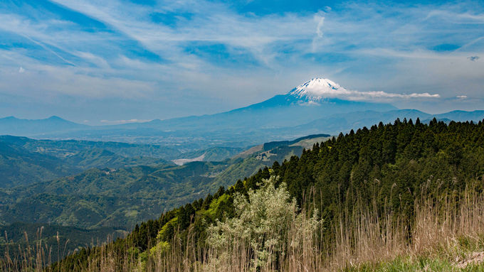 初心者お勧め!富士山大展望の神奈川・高松山ハイキング
