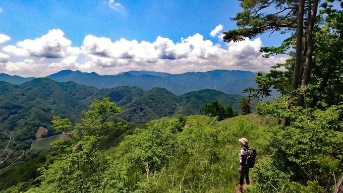 富士見台分岐へ進み大展望の甲州高尾山の稜線へ