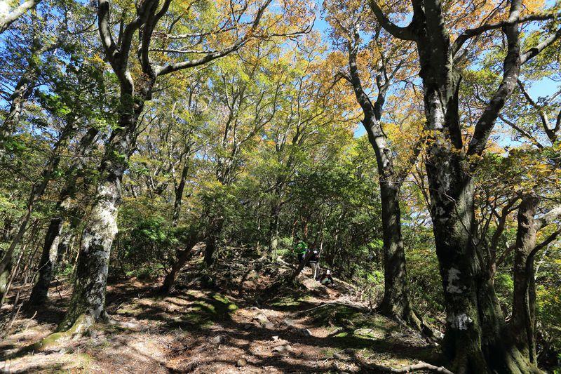圧倒的な紅葉!百名山・静岡「天城山」で大自然の彩りを体験
