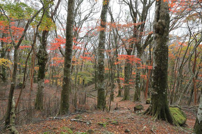 晩秋は驚くほどの紅葉美が続く