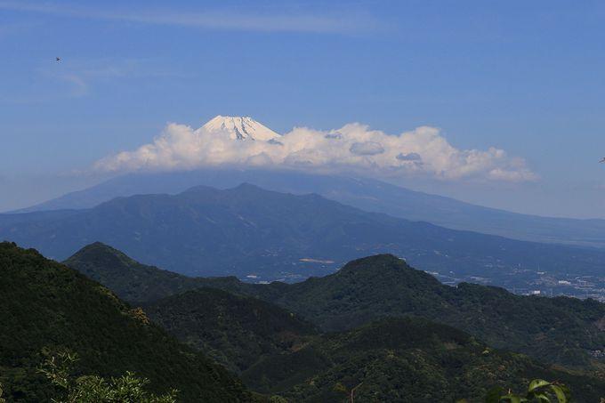 最初の富士山を城山で!ウバメガシの群生に驚愕する