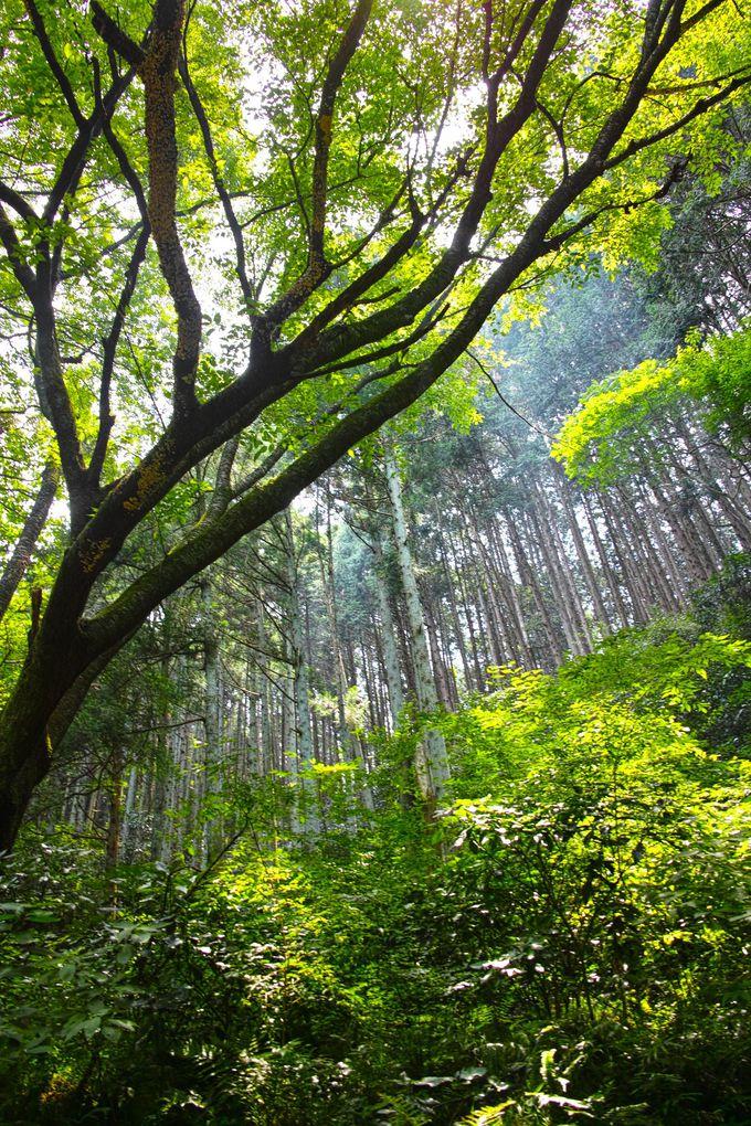 森閑とした森を抜けた先を分岐して葛城山へ!3山縦走ルートを動画で確認!