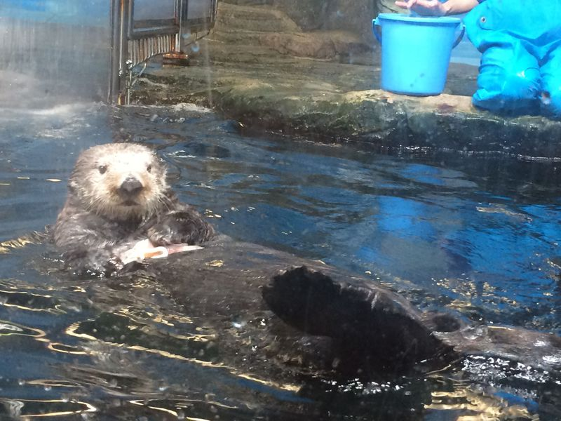 ラッコやスナメリに会える水族館!福岡「マリンワールド海の中道」