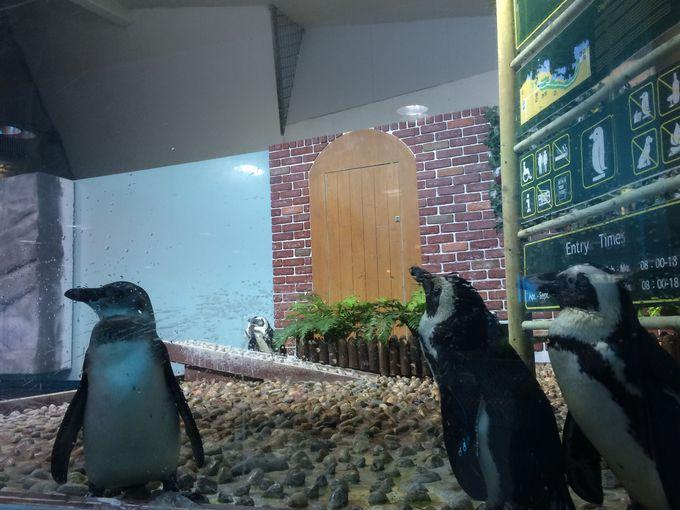 純愛3部作「恋のペンギン物語」
