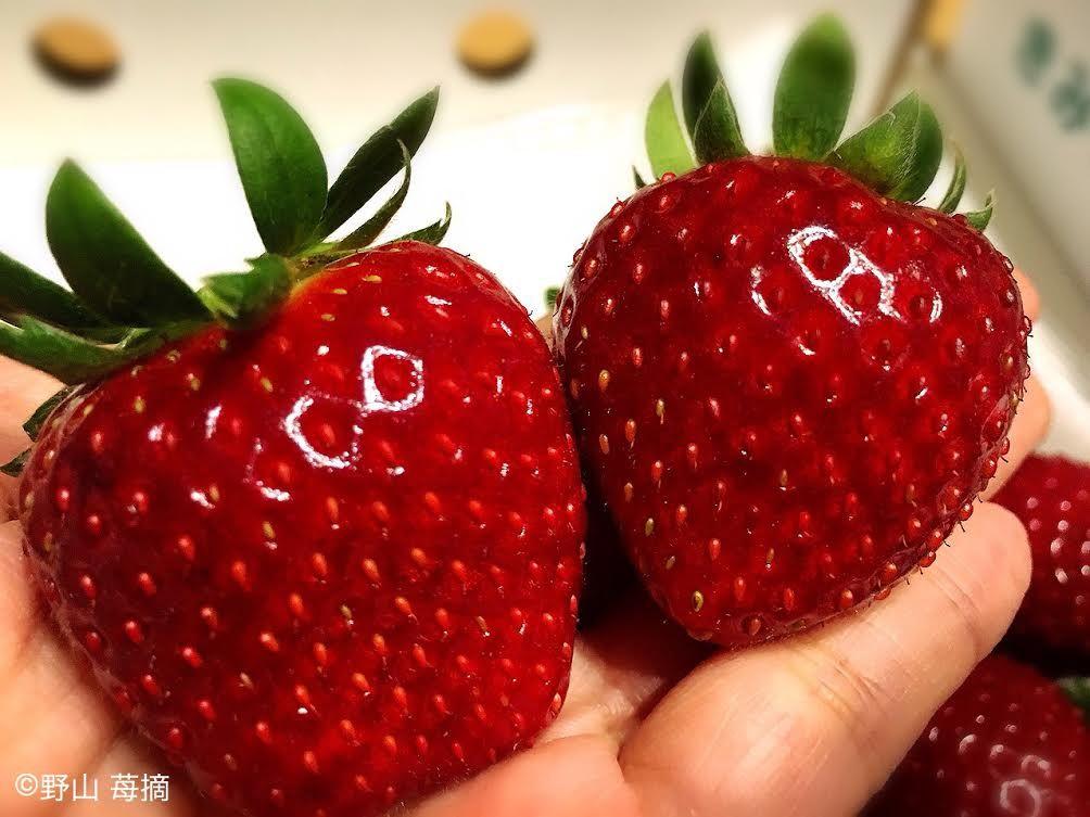 中まで赤く糖度が高いイチゴ!