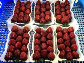 キルフェボンで提供中のくろいちごを産地で!千葉・浦部農園はくろいちごの里