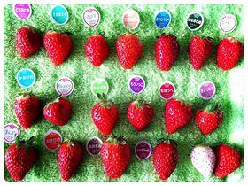 アロマにビーナスハート!千葉・ドラゴンファームで苺20種食べ比べ&いちご大福作り
