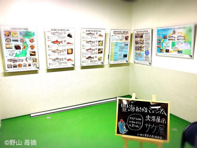 サケ展や写真展に食を学べるキッチンスタジオも!?