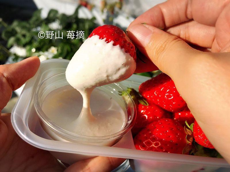 濃厚クリームをつけていちご狩り!秩父「中蒔田 富田農園」で完熟紅ほっぺを食べつくそう!