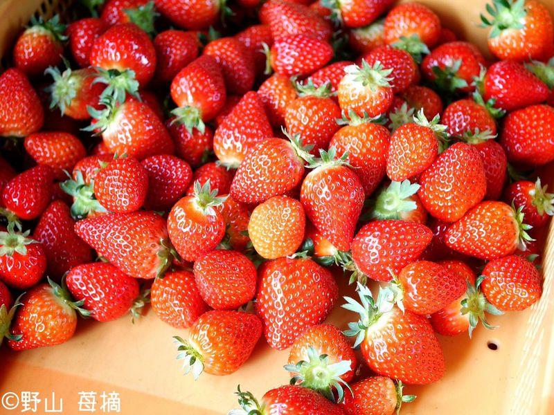 新品種かおりん&あまりんに希少な彩のかおり!埼玉いちごを食べつくそう!