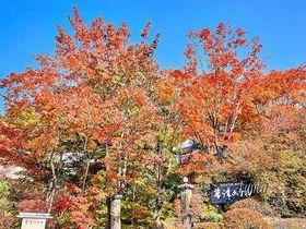 草津温泉の紅葉はライトアップも必見!温泉街の紅葉おすすめ5選