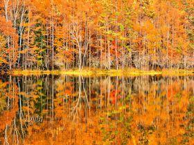 御射鹿池で紅葉狩り!蓼科・横谷渓谷の紅葉は曇天が見頃