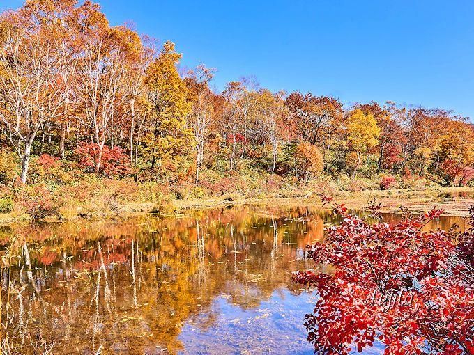 食後はオープンガーデンや周囲の紅葉を楽しもう!