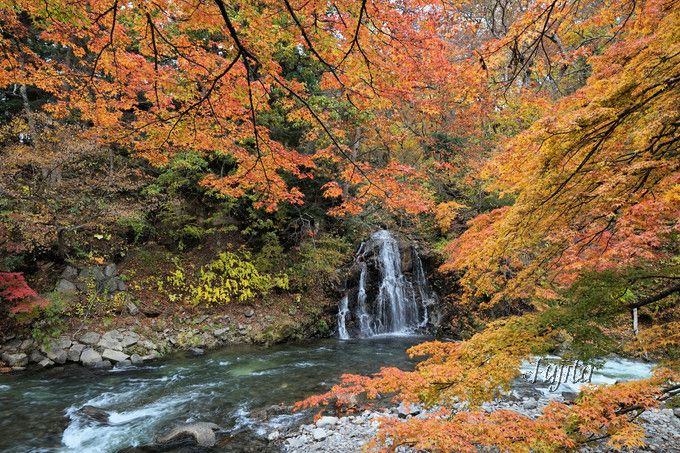 不動の滝の紅葉も必見!