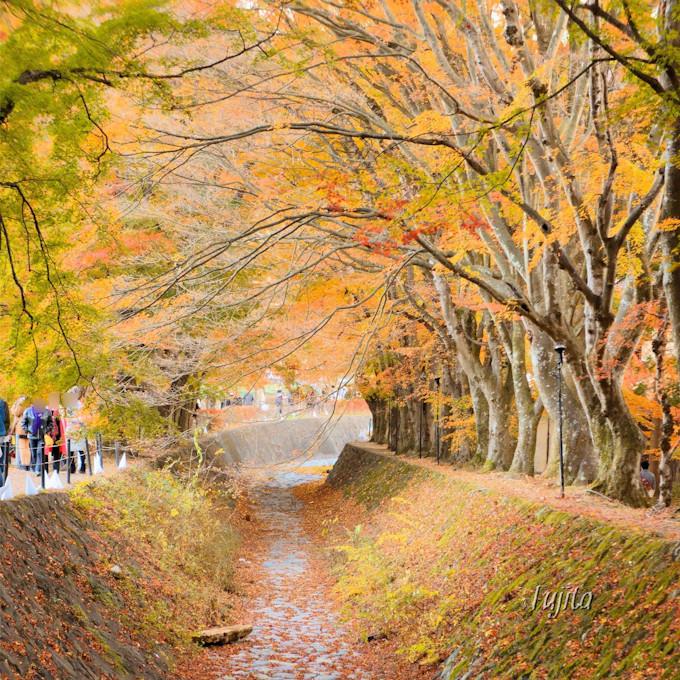 河口湖の紅葉は「もみじ回廊」がおすすめ!