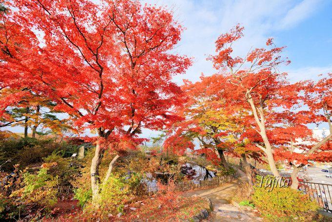 伊香保の穴場!石段アルウィン公園の紅葉