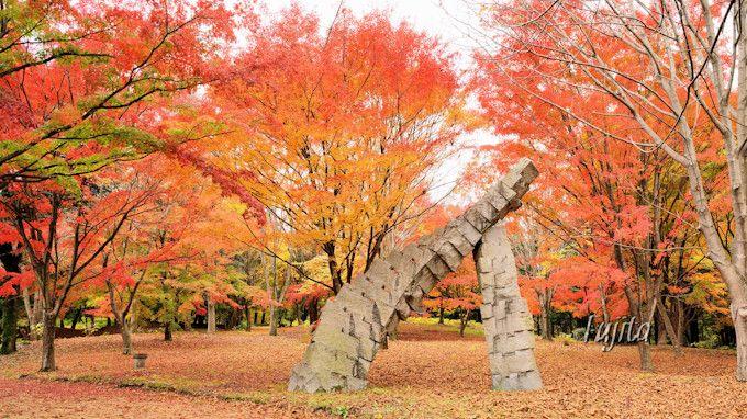 晩秋の紅葉は渋川市総合公園へ!