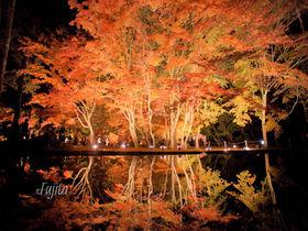 曽木公園の紅葉はライトアップが凄い!岐阜の紅葉狩り名所