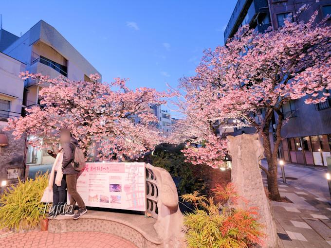 ドラゴン橋付近が桜の花見に最適な理由