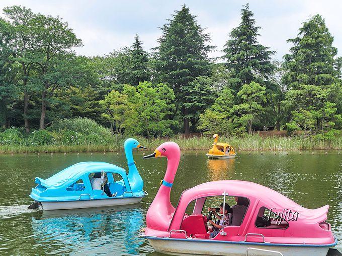 県立柏の葉公園のボートも駐車場も無料!