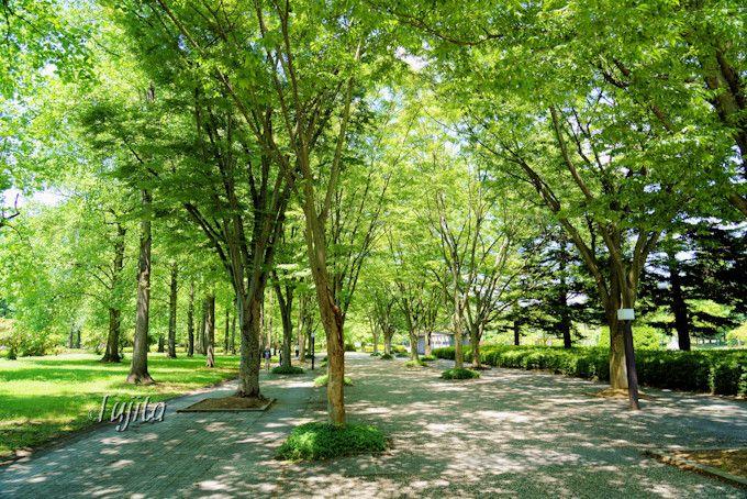 かき氷の食後に、山形県総合運動公園の緑も楽しもう!
