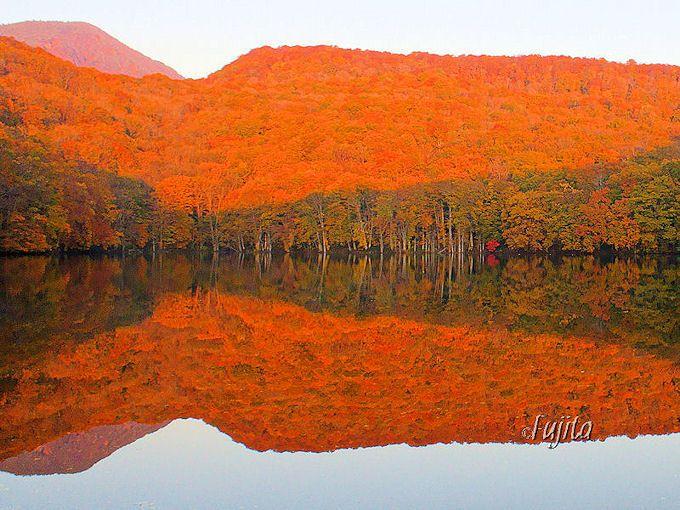紅葉の「蔦沼」は蔦温泉旅館を代表する絶景!