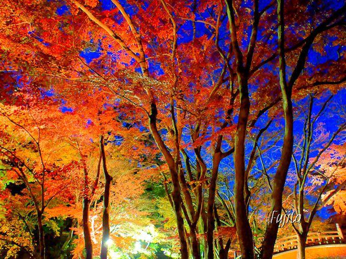 熱海温泉の絶景観光スポット五選!花と紅葉の名所