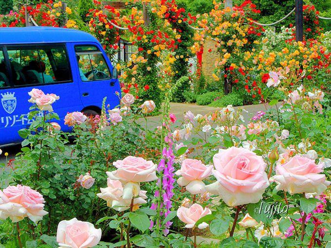 アカオハーブ&ローズガーデンの幻想的なバラの絶景は必見!