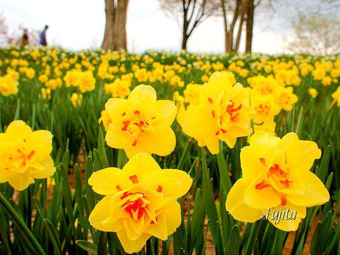 早春の東京ドイツ村ではイルミネーションに加え、花やみかん狩りも同時に楽しめる!