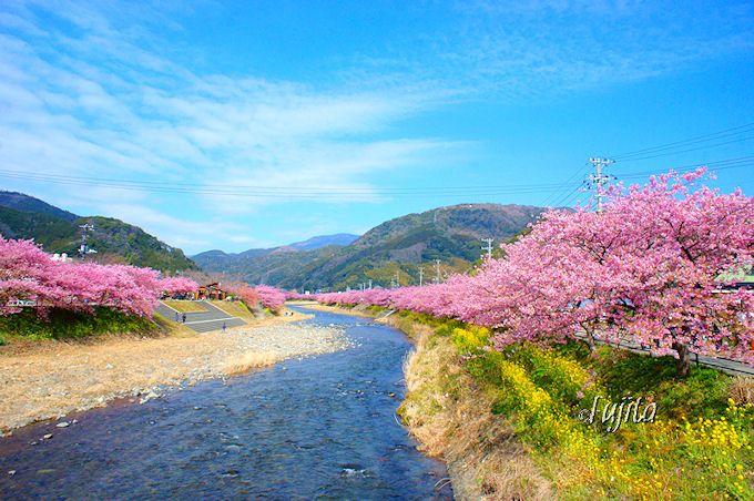いち早く春を感じるならココ!早咲きの河津桜の名所「伊豆・河津町」