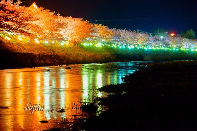 夜桜ライトアップもおすすめ!絶景ポイント4