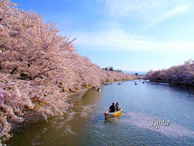 弘前さくらまつりの絶景をボートで楽しめる西濠
