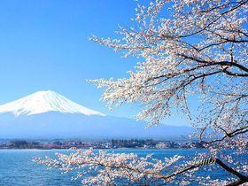 山梨のおすすめ桜スポット10選 富士山や河口湖との絶景コラボも!【2021】