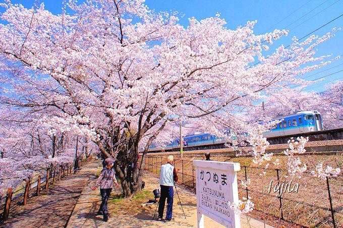 甚六桜(甲州市)は勝沼駅自体が桜名所!
