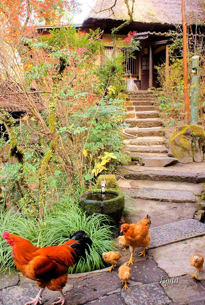 忘れの里 雅叙苑は「にわとり優先」の日本の原風景
