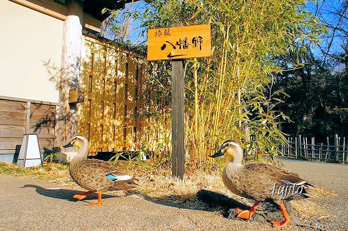 「八幡野温泉郷 杜の湯 きらの里」は、鴨の出迎えで里山に誘う!
