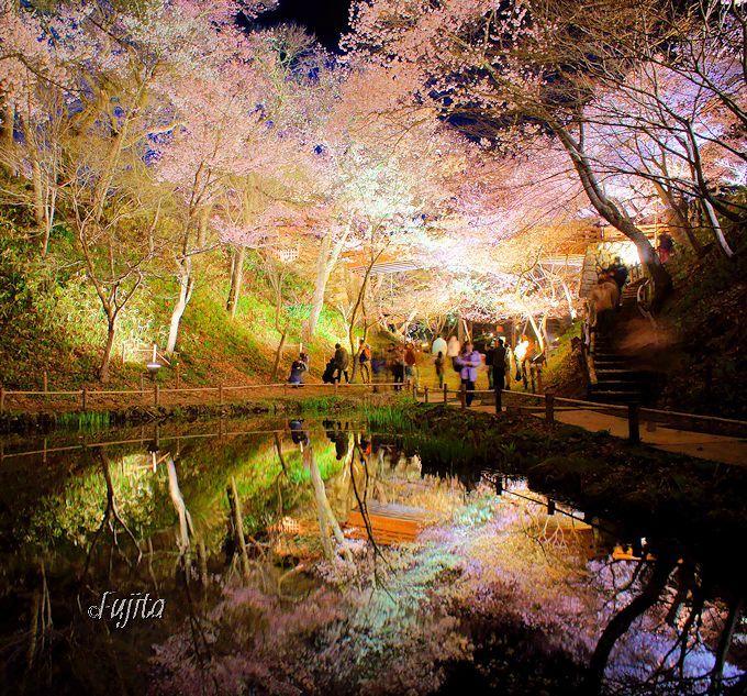 高遠城址公園の夜桜は、最後にもう一度水鏡を見よう!