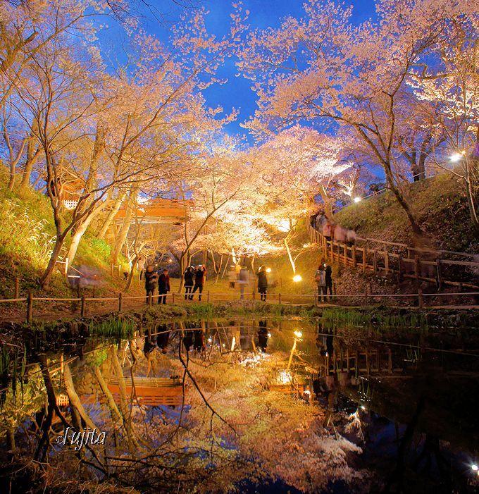 高遠城址公園の夜桜は、水鏡の前で見よう!