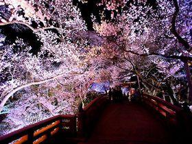 夜桜ライトアップ名所 旅の専門家が選んだ幽玄の美11選