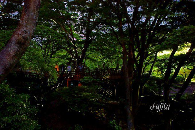 熱海梅園のホタル観察スポットは雙眉橋周辺