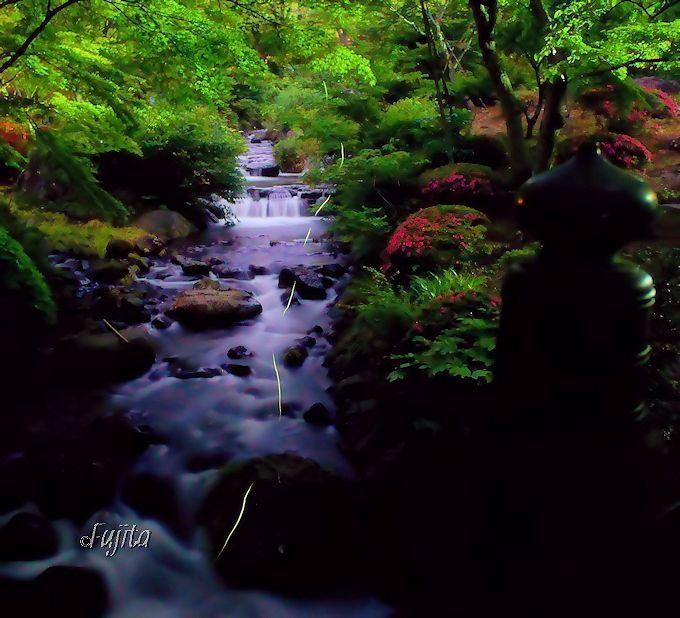 熱海梅園のホタルは初川清流とコラボします!