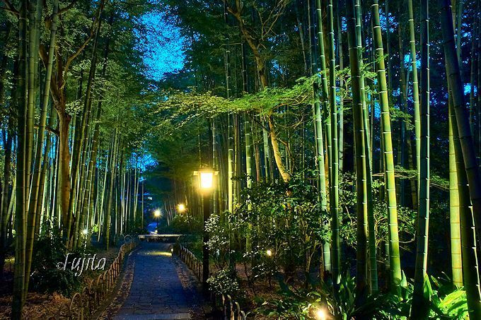 修善寺温泉「ほたるの夕べ」と「竹林の小径」の夜景を楽しもう!